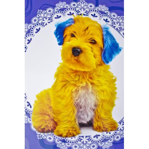 Chien jaune et bleu