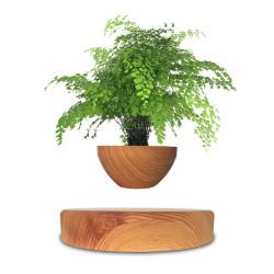 Mini-jardin en lévitation Babylonia aspect bois